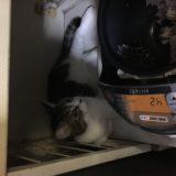小澤先生のネコちゃん、炊飯器が好き